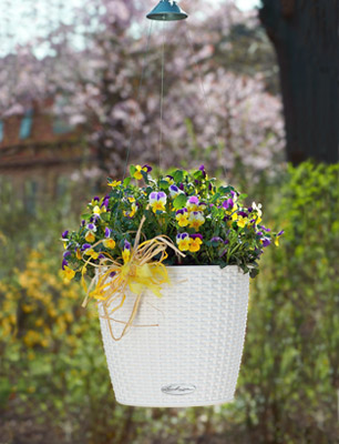 Hanging basket NIDO Cottage white with violets