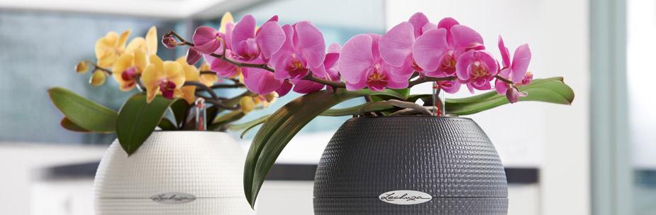 Conseils et astuces pour des orchid es splendides - Prendre soin des orchidees ...