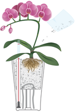 Orchidées en LECHUZA