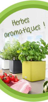 Il est temps de cueillir vos herbes aromatiques !